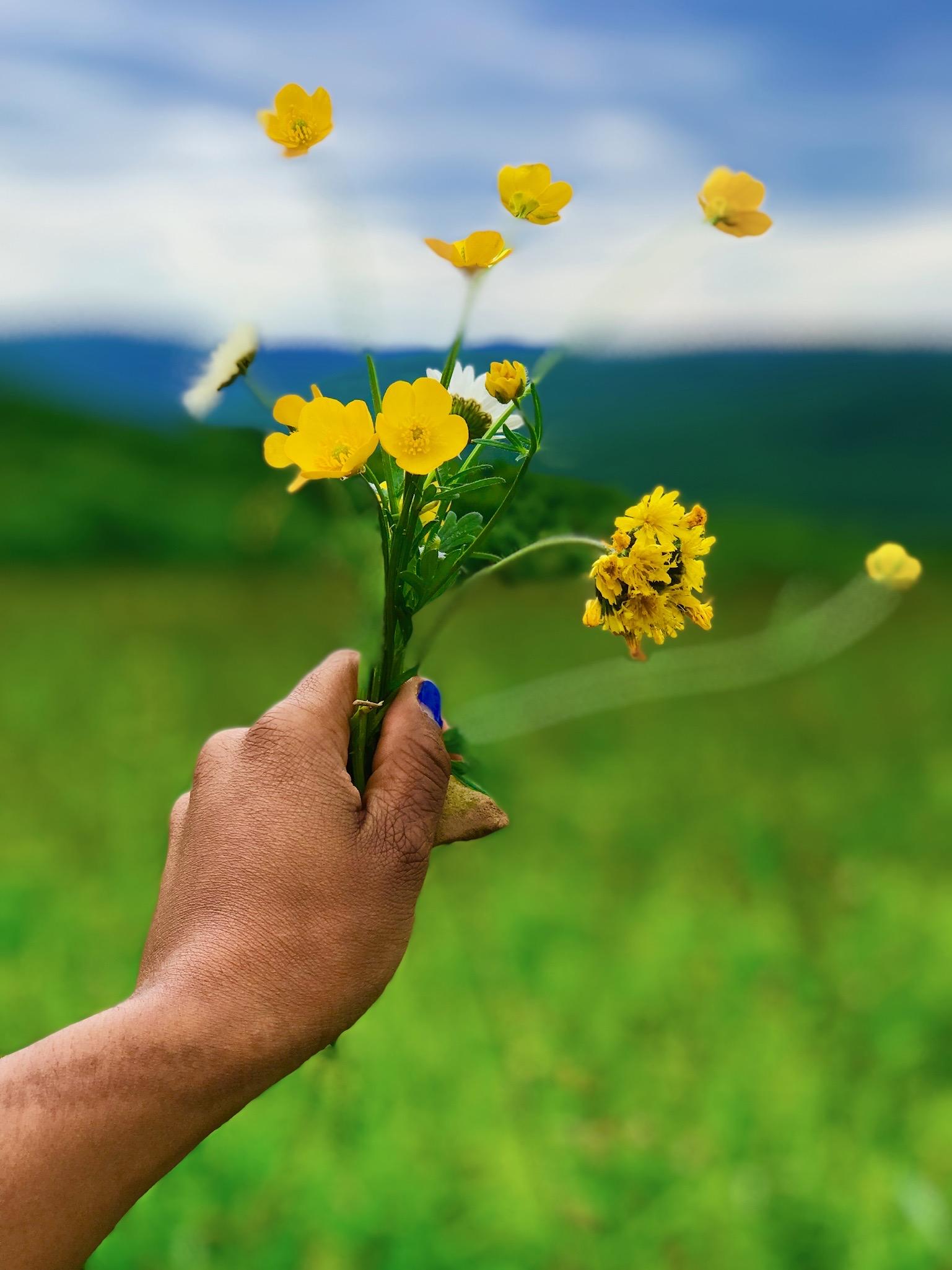 Hand holding yellow flowers