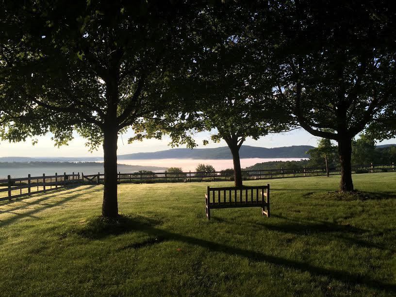 Bench of serenity