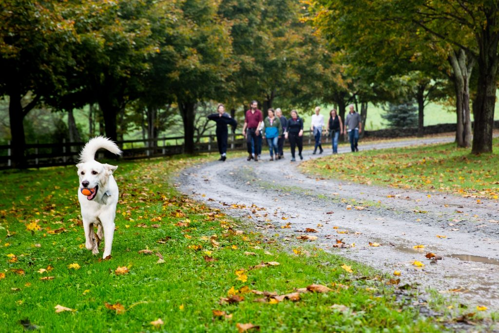Dog walking in front of group of people