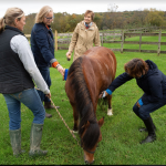 Women brushing horse